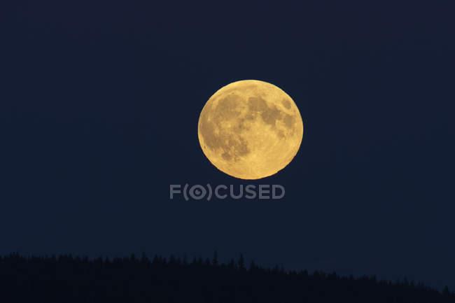 Повний місяць в темну ніч над Лісовий верхівок дерев — стокове фото
