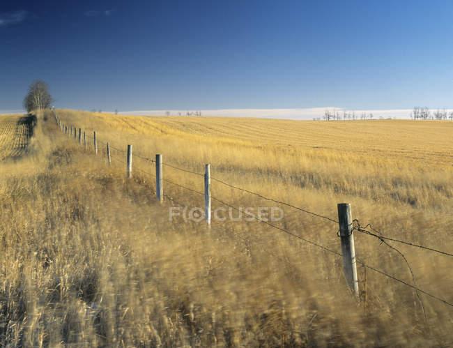 Windy cropland and fence line near Cremona, Alberta, Canada. — Stock Photo