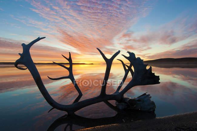 Corna caraibiche nello scenario dell'alba autunnale, Terre Desolate, Territori centrali del Nord-Ovest, Canada Artico — Foto stock