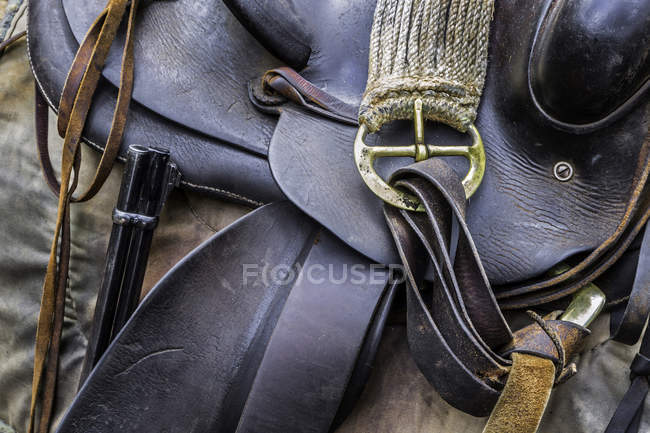 Close-up of leather horse tack detail with strap — Stock Photo