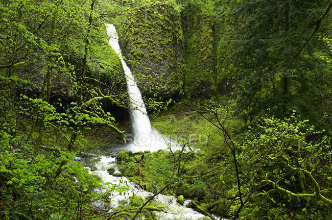Pferdeschwanz fällt am Columbia River Gorge National Scenic Area, Washington, Usa — Stockfoto