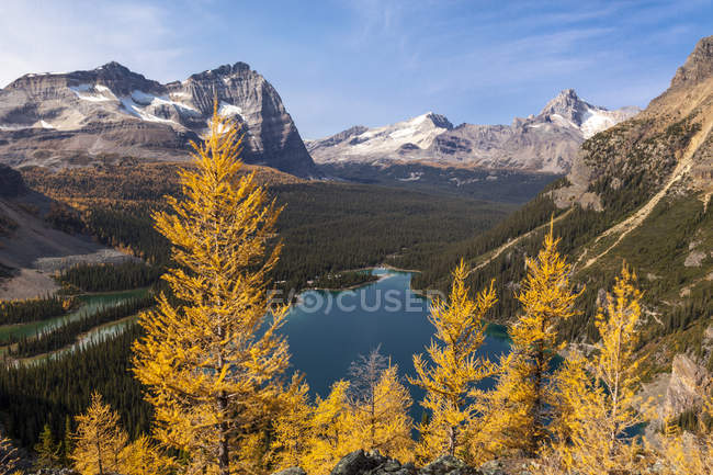 Alpine larch in autumnal foliage overlooking Lake Ohara in Yoho National Park, British Columbia Canada. — Stock Photo