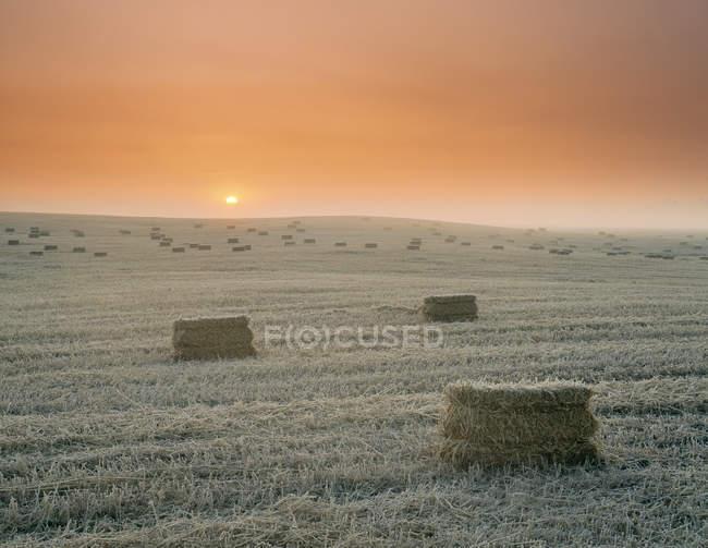 Quadratische Heuballen bei Sonnenaufgang in der Nähe von Leduc, Alberta, Kanada — Stockfoto