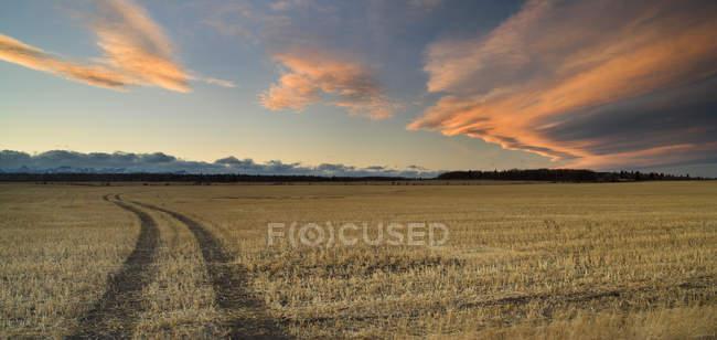Stoppelfeld und Wolkenlandschaft am Himmel bei Cochrane, Alberta, Kanada. — Stockfoto