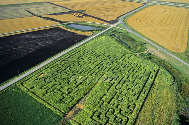 Aerial view of green corn maze of Manitoba, Canada. — Stock Photo