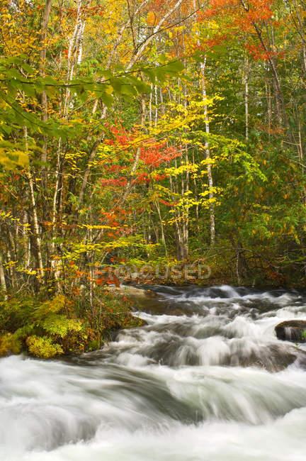 Рапиды и листья осенних цветов, Редстоун-Крик, Галибуртон, Онтарио, Канада — стоковое фото