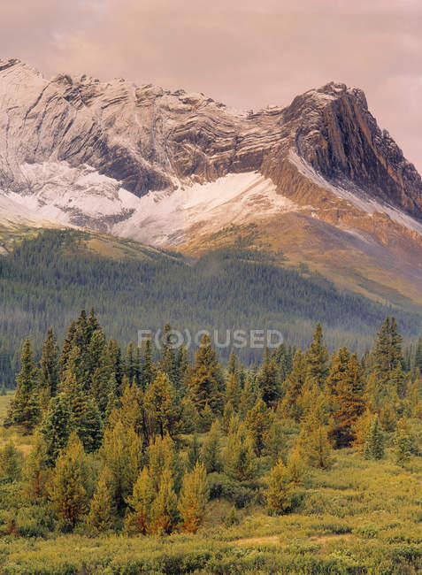Eagle Nest Pass and woodland of Willmore Wilderness Area, Alberta, Canada — Stock Photo