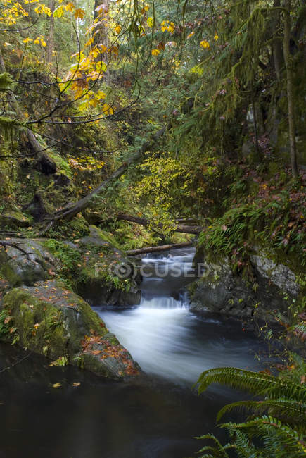 Forest creek im goldstream provincial park, langford, britisch columbia, kanada. — Stockfoto