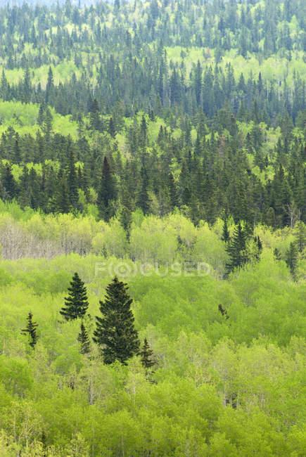 Bosque mixto de Bow Valley Provincial Park, Kananaskis Country, Alberta, Canadá - foto de stock