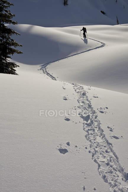Esquiador masculino seguindo a pista de pele em Sol Mountain Lodge, Monashees, British Columbia, Canadá — Fotografia de Stock