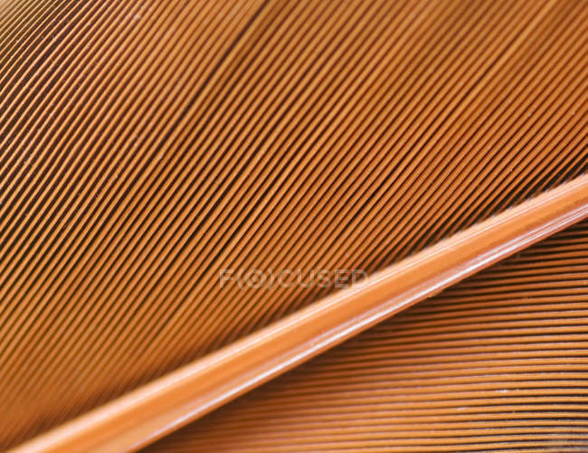Close-up of natural pattern of northern flicker feather. — Stock Photo