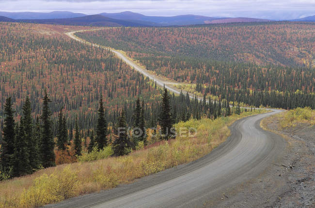 Autumnal foliage of forest along highway at Yukon Territory, Canada. — Stock Photo