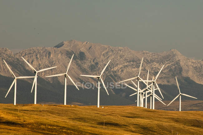 Power-generating windmills in meadow of Pincher Creek, Alberta, Canada. — Stock Photo