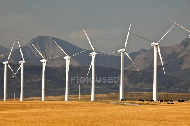Power-generating windmills in meadow of Pincher Creek, Alberta, Canada. — Stock Photo
