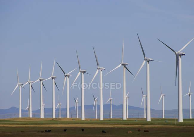 Moinhos de vento geradores de energia em campo perto de Fort MacLeod, Alberta, Canadá . — Fotografia de Stock