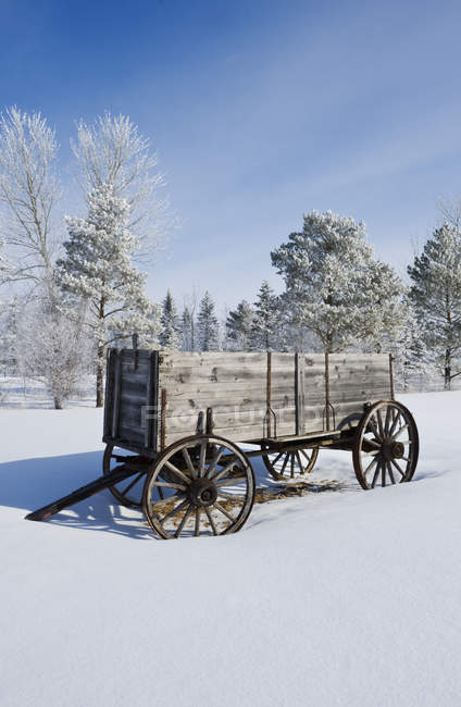 Old wagon in woodland of hoarfrost covered trees near Oakbank, Manitoba, Canada — Stock Photo