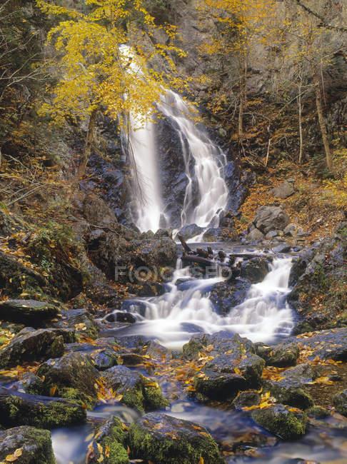 Terza cascata delle cascate del caveau nel Fundy National Park, New Brunswick, Canada — Foto stock