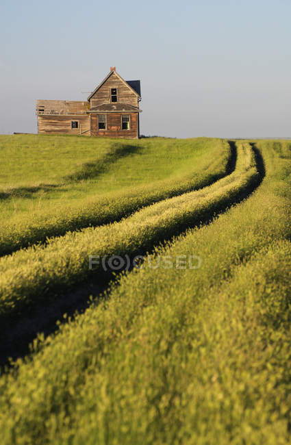 Abandoned house and field with tracks near Leader, Saskatchewan, Canada — Stock Photo