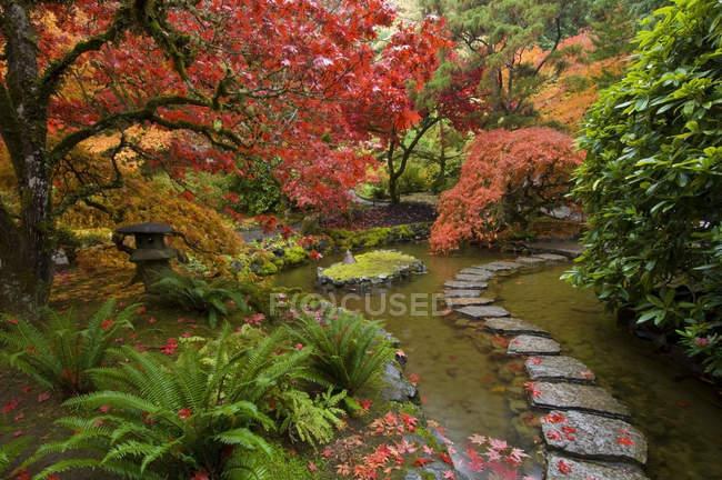 Herbstliches Laub und Pfad durch Bach im japanischen Garten, Butchartgärten, Brentwood Bay, Britische Columbia, Kanada — Stockfoto