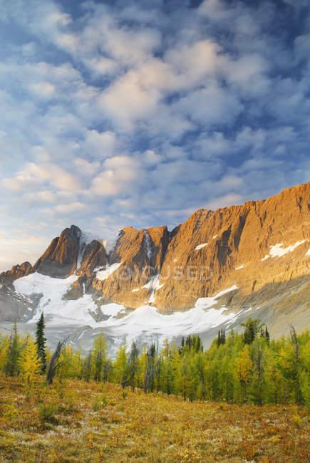 Alondra alpina creciendo en Tumbling Pass, Parque Nacional Kootenay, Columbia Británica, Canadá - foto de stock