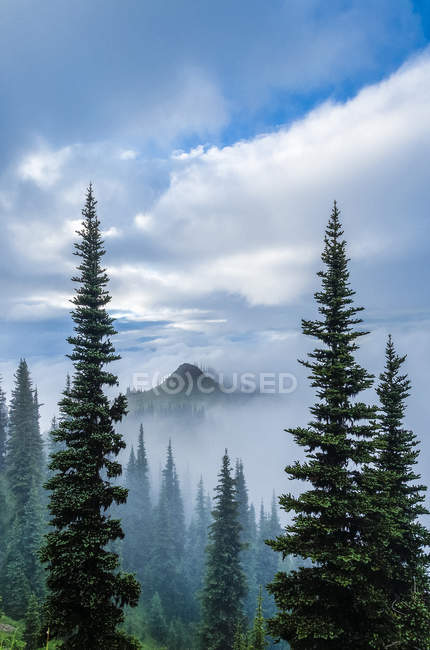 Cloud strewn mountain ridge of Deer Park, Olympic National Park, Washington, USA — Stock Photo