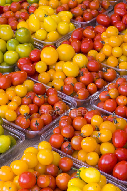 Свіжі барвисті помідори в контейнерах на дисплеї на ринку, повний кадр. — стокове фото