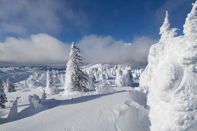 Fantasmi di neve a Sun Peaks Ski Resort in uno scenario drammatico inverno vicino a Kamloops, British Columbia Canada — Foto stock