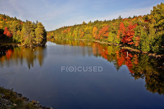 Autumnal foliage reflection in lake water in Algonquin Park, Ontario, Canada — Stock Photo