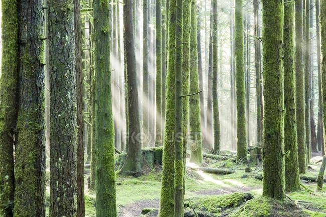 Sunrays shining through trees at Golden Ears Provincial Park in Maple Ridge, British Columbia Canada — Stock Photo