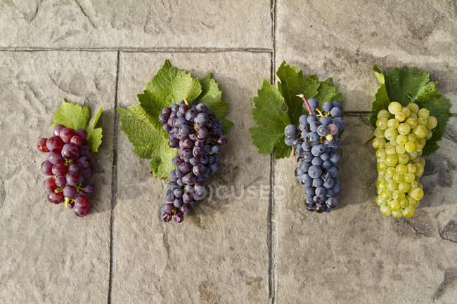 Ripe Gewurtztraminer, Pinot Noir, Merlot and Chardonnay grapes on stone surface, top view. — Stock Photo