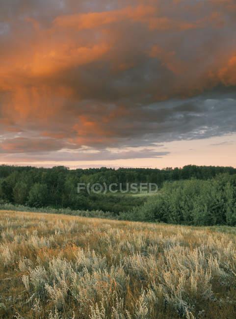 Драматичні небо над трав'янистих Цюй Аппель Долина Саскачеван, Канада — стокове фото