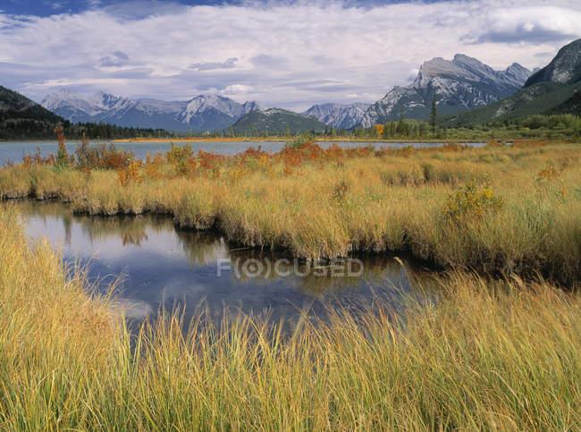 Marsh grass on Vermilion Lakes, Banff National Park, Alberta, Canada. — стокове фото