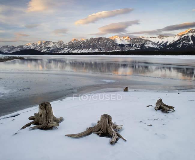 Tree stumps in coast of Lower Kananaskis Lake, Kananaskis Country, Alberta, Canada — Stock Photo
