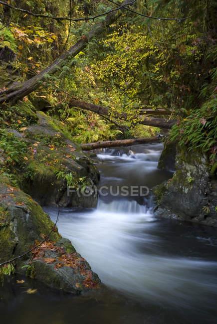 Forest Creek nel Goldstream Provincial Park, Langford, Columbia Britannica, Canada . — Foto stock