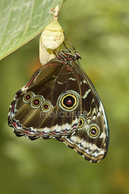 Tropical butterfly sitting on plant, close-up — стокове фото