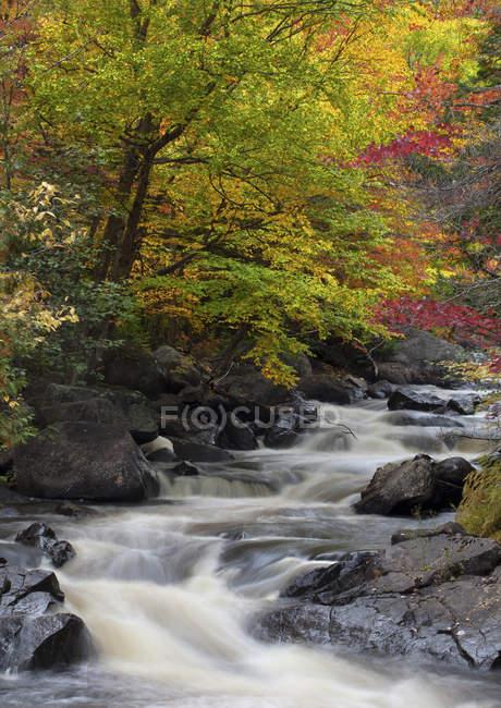 Осенняя листва в Донкастер парке вблизи Сен-Совер, Лаврентийских, Квебек, Канада — стоковое фото
