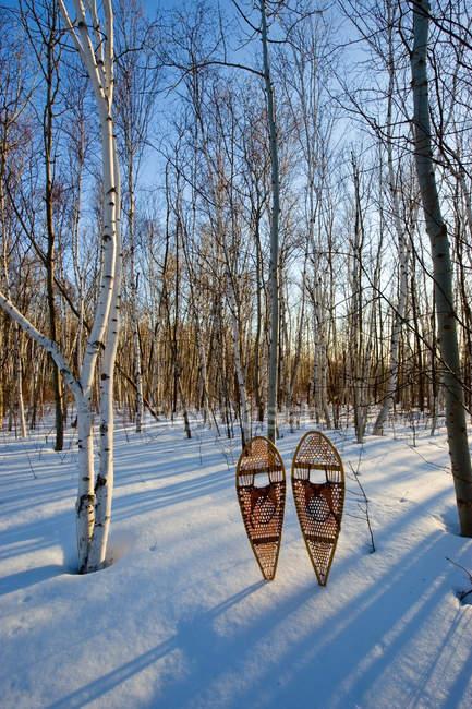 Foresta di betulle e ciaspole nella neve, montare Nemo Conservation Area vicino a Burlington, Ontario, Canada — Foto stock