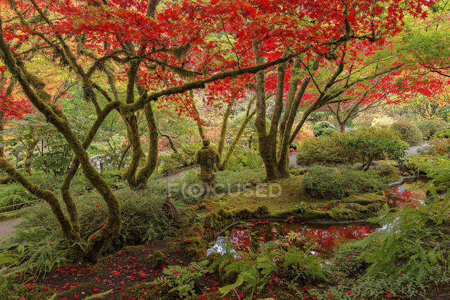 Autumnal foliage in Japanese Garden, Butchart Gardens, Brentwood Bay, British Columbia, Canada — Stock Photo