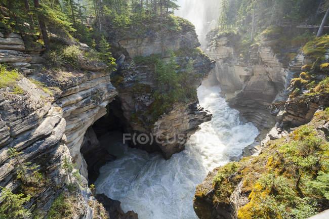 Vista de ángulo alto de las cataratas de Athabasca y el río Athabasca que fluye, Parque Nacional Jasper, Alberta, Canadá . - foto de stock