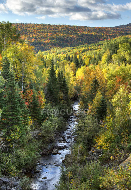 Mountain river in forest in autumnal foliage, Petite-Riviere-Saint-Francois, Charlevoix, Quebec, Canada — Stock Photo