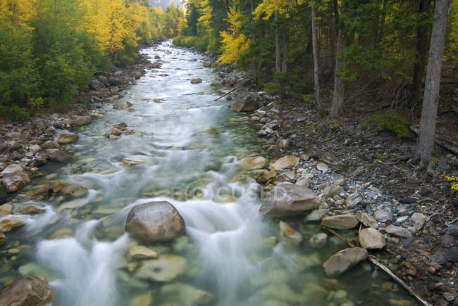 Trees in autumnal foliage along Cayoosh Creek, British Columbia, Canada. — Stock Photo