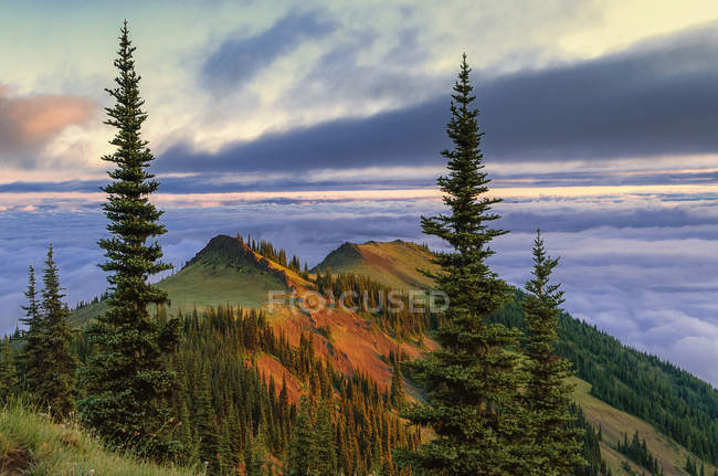 Sub-alpine mountain ridge at sunrise in Deer Park, Olympic National Park, Washington, USA — Stock Photo