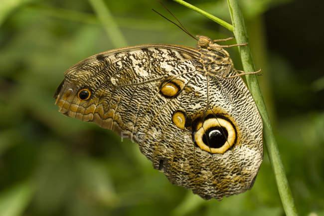 Búho mariposa sentado en la planta, primer plano - foto de stock