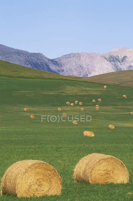 Rollte Heuballen in Ausläufern der Rocky Mountains, Alberta, Kanada. — Stockfoto