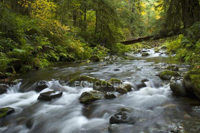 Mountain river in Goldstream Provincial Park, Langford, British Columbia, Canada. — Stock Photo