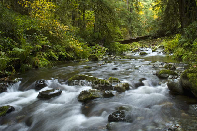 Mountain river in goldstream provincial park, langford, britisch columbia, kanada. — Stockfoto