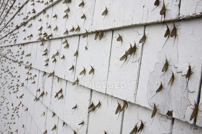 Поденок охоплюють стороні будівлі, повний кадр — стокове фото