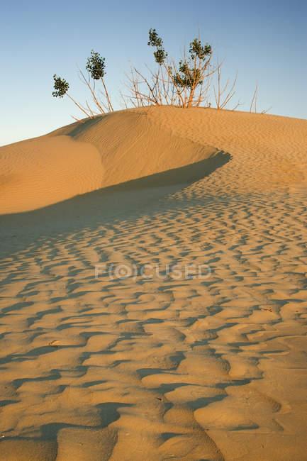 Plants growing on sand dunes in Great Sandhills near Sceptre, Saskatchewan, Canada. — Stock Photo