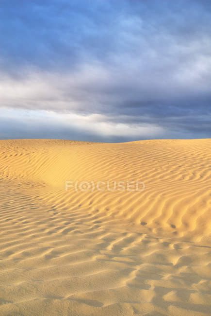 Schéma naturel des dunes de sable de Great Sandhills, Saskatchewan, Canada . — Photo de stock