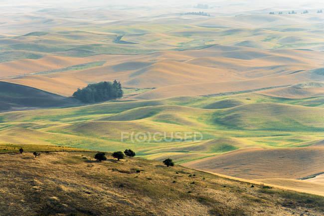 Rolling hills at sunrise in Palouse, Washington State, USA. — Stock Photo